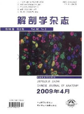 解剖学杂志
