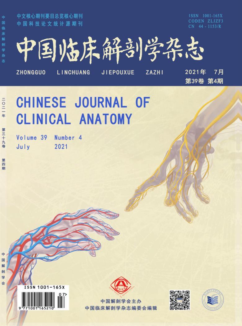 中国临床解剖学